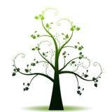 Spring tree royalty free stock photos