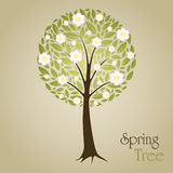 Spring tree. Blossom Tree vector illustration with green leafs and flowers. Nature symbol graphic design Royalty Free Stock Photos