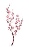 Spring tree royalty free stock images