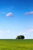 Spring tree. Lonely fresh green spring tree in the green grass' meadow Stock Photo