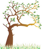 Spring tree. A vector illustration of tree in the spring Royalty Free Stock Image