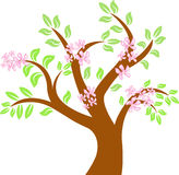 Spring_tree Royalty Free Stock Images