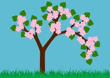 Spring tree Stock Photos