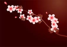 Spring tree arm. It is a spring tree arm, it is a cherry flower Stock Photos