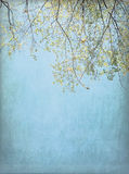 Spring Tree Background Stock Photography