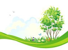 Spring tree background. Illustration of a spring tree Stock Photography