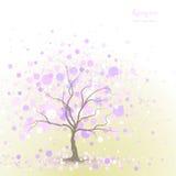 Spring tree background Stock Image