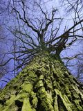 Spring tree from below royalty free stock photos