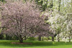 Spring Tree Blooms. Pink and White Spring Tree Blooms Cherry and Dogwood Trees royalty free stock photo
