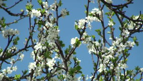 Spring tree blossom stock video footage