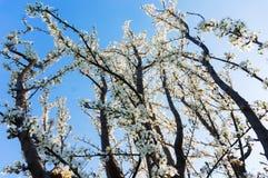Spring tree blossoms stock photos