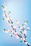 Branch of a flowering tree. Royalty Free Stock Photo