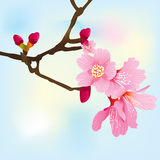 Spring tree branch with pink blossoms Royalty Free Stock Photography