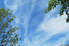 Spring tree branches against the morning sky Royalty Free Stock Photography