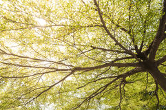 Spring tree branches Royalty Free Stock Photos