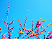 Spring tree with branches and pink flowers. In the park`s garden stock photo