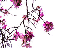 Spring tree with branches and pink flowers. In the park`s garden stock photography