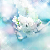 Spring tree branches with white flowers.digital painting Royalty Free Stock Photos