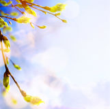 Spring tree buds and young leaves; spring background Royalty Free Stock Photos
