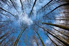 Spring tree crowns on deep blue sky Stock Photos