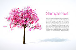Spring tree Royalty Free Stock Image