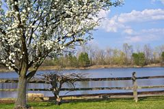 Spring Tree Farm Royalty Free Stock Photos