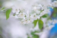 Spring tree flower set Royalty Free Stock Photo