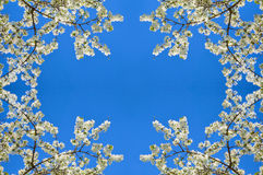 Spring tree Royalty Free Stock Photo