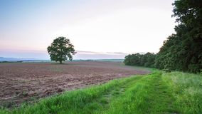 Spring tree with fresh leaves on a meadow. Video stock video