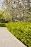 Spring tree, green belt Royalty Free Stock Image
