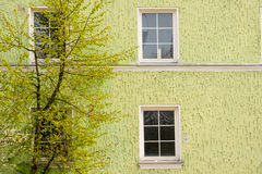 Spring tree. Green spring tree in the front of a house wall with four windows Stock Photography