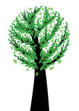 Spring tree with green leaves. Tree silhouette with fresh green leaves on white background Royalty Free Stock Photos