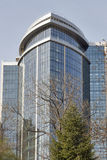 Spring tree and hotel Hilton in Kiev, Ukraine. Stock Photography