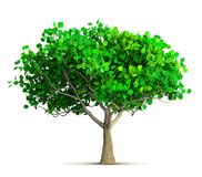 A spring tree isolated 3D illustration