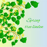 Spring tree linden vector Stock Images