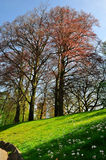 Spring tree on meadow Stock Photography