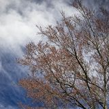 Spring Tree with New Leaves stock photography