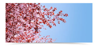 Spring tree banner. Spring tree with pink flowers and blue sky banner with shadow stock photo