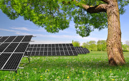 Spring tree with solar energy panels. On meadow Stock Photos