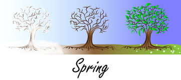 Spring tree transformation. Spring colors Stock Image