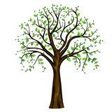 Spring tree, vector Stock Images