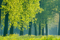 Spring trees Stock Image
