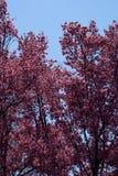 Spring Trees Royalty Free Stock Photos
