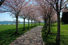 Spring Trees. With pink blossoms and path in park by lake stock image