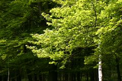 Spring trees. Different colored trees in a spring forest Royalty Free Stock Image