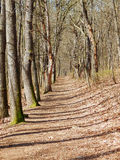 Spring trees alley Royalty Free Stock Photos