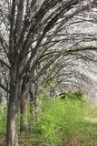 Spring trees Stock Photos