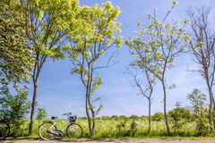 Spring trees with bicycle Royalty Free Stock Photo