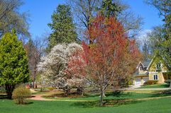 Spring Trees Blossoming in a Residential Area. Beautiful spring trees blooming in a residential area of Lake Geneva, Wisconsin royalty free stock photo