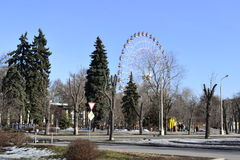 Spring trees. In exhibition center in Moscow Stock Images